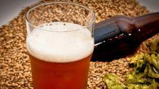 Интересные факты о пивном напитке и его отличие от обычного пива