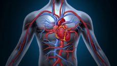 Патологическое влияние алкоголя на сосуды и сердце
