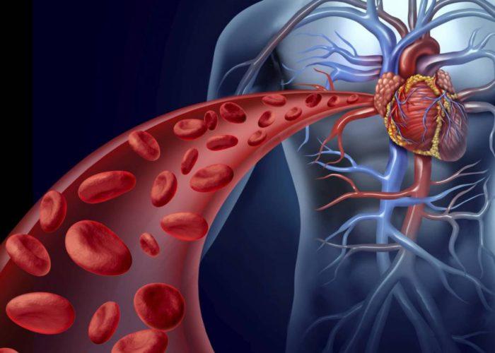 Эластичность кровеносных сосудов