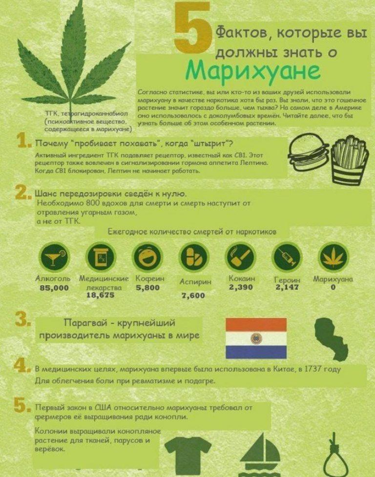 Инфографик конопли