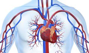 Нарушения в работе кровеносной системы