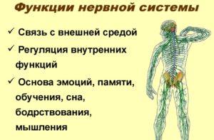 Нейропсихические функции