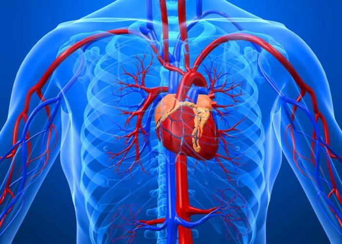 Заболевания кровеносной системы