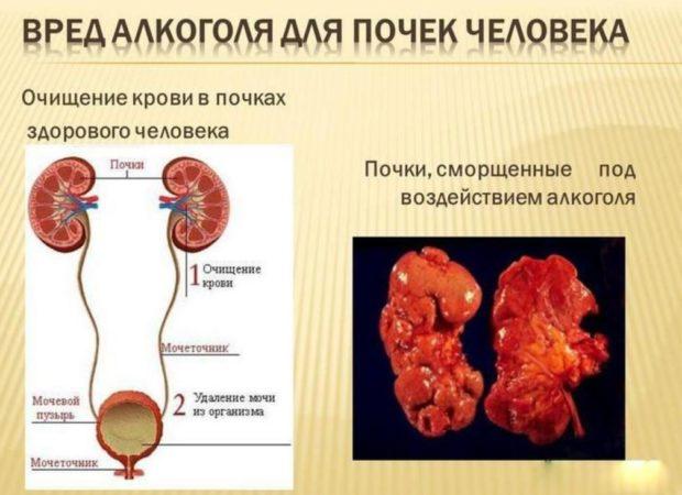 Благодаря защитной функции обеспечивается выведение токсических соединений, которые образовываются при обменных процесса