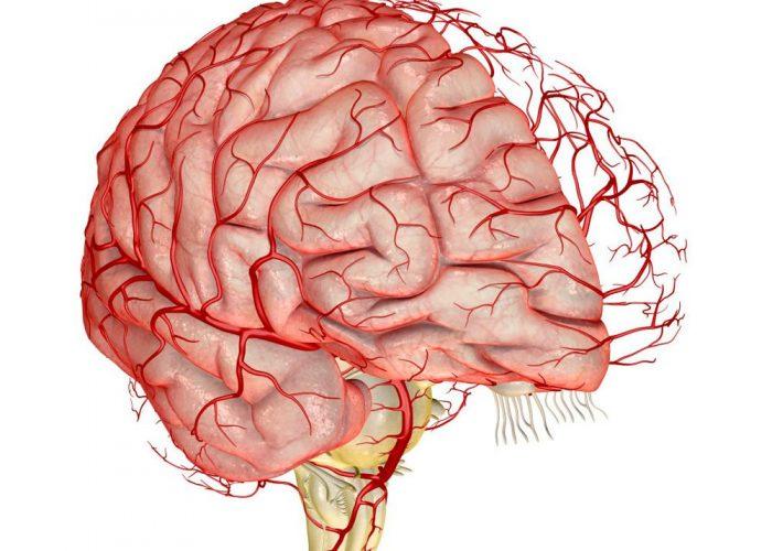 Гибель коры головного мозга