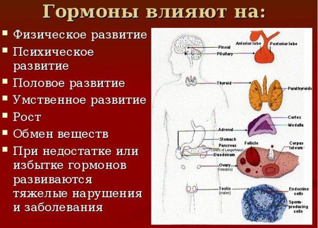 На что влияют гормоны