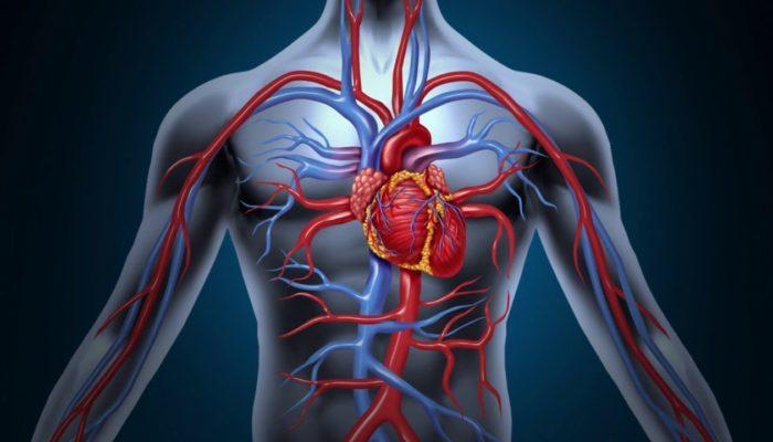 Наблюдается вред на сердечно-сосудистую систему