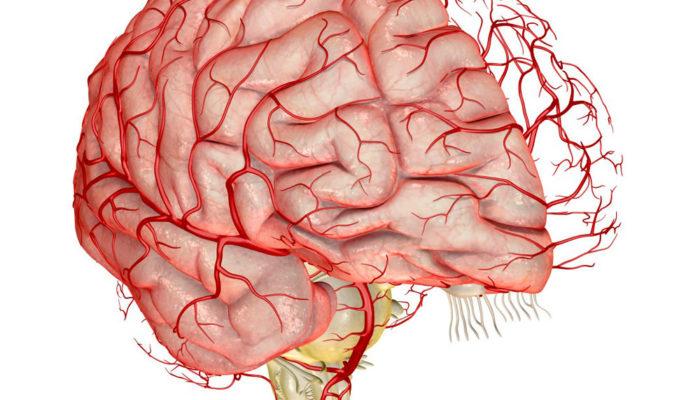 Наблюдается выраженный вред для головного мозга