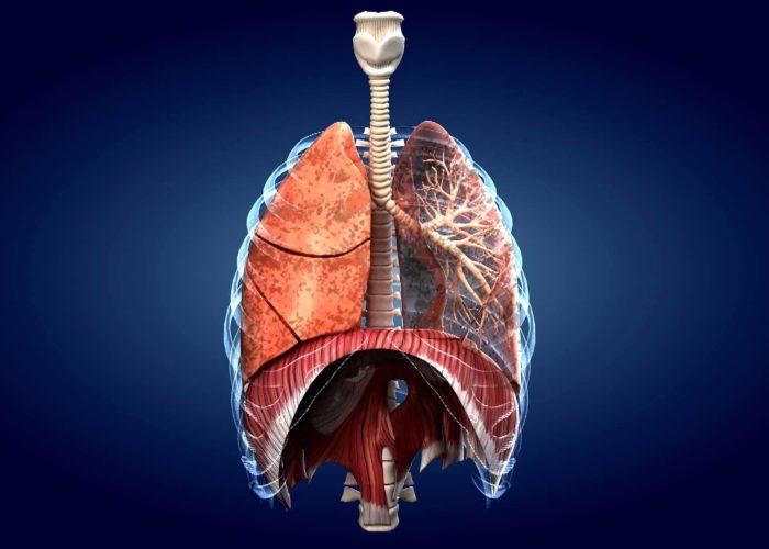 Органов дыхательной системы