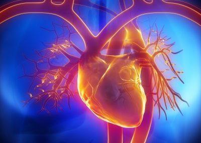 Перегрузка сердечно - сосудистой системы