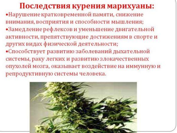 Последствия курения марихуаны