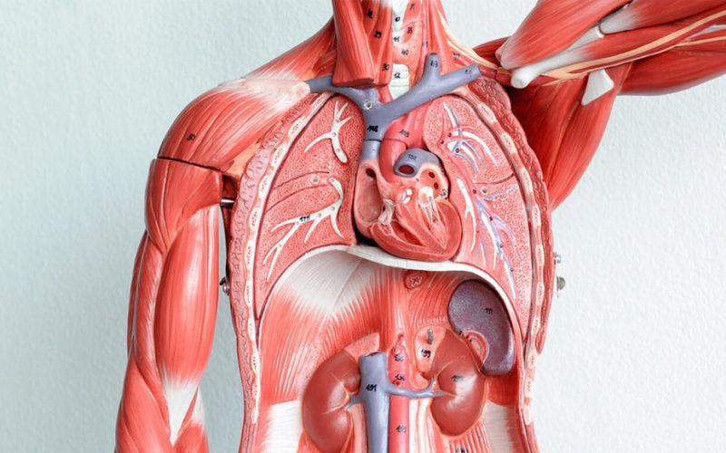 Сбои в функционировании сердечно-сосудистой систем