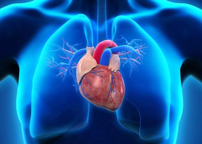 Существует риск развития сердечно-сосудистой системы