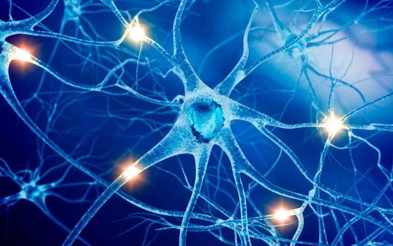 Центральную нервную систему