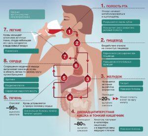 Влияние алкоголя на организм и жизнь человека
