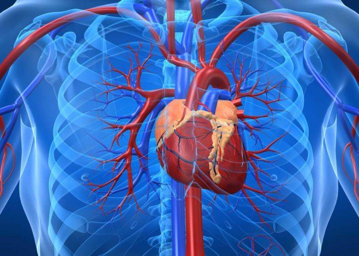 Возникновение сердечно-сосудистых патологий