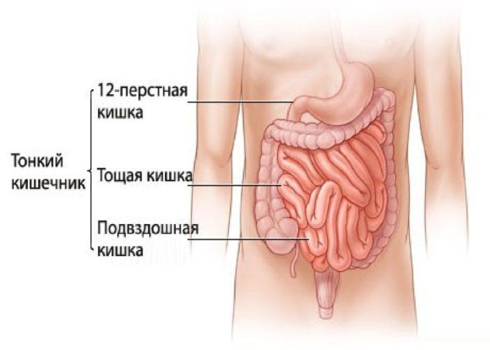 Заболевания кишечника и желудка