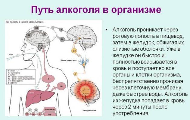 Что происходит в теле человека во время опьянения