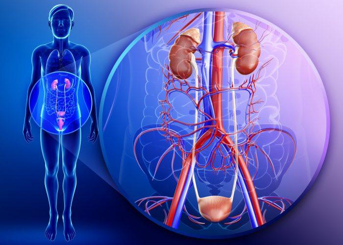 Инфекционных заболеваний мочеполовой ситемы