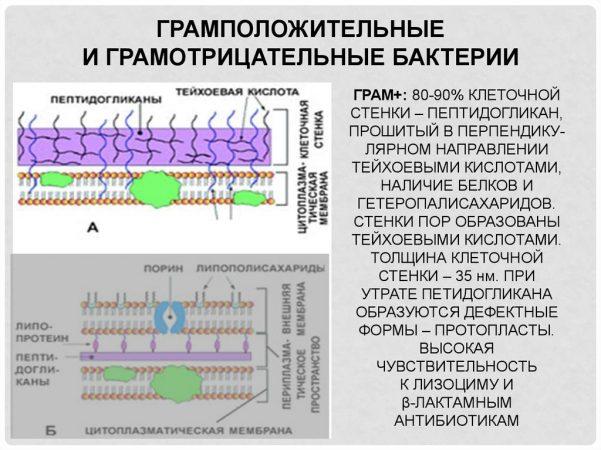 Бактерии разной этиологии