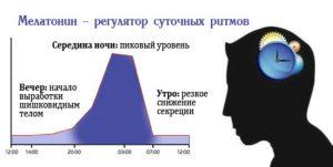 Мелатонин - регулятор суточных норм