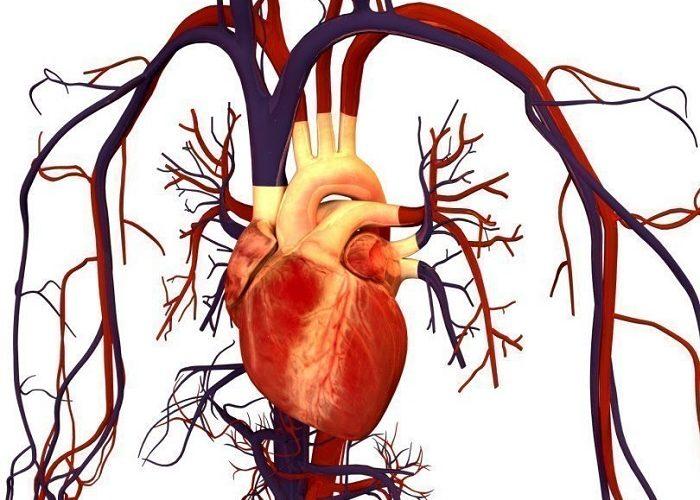 Нарушениями в работе сердечно-сосудистой системы
