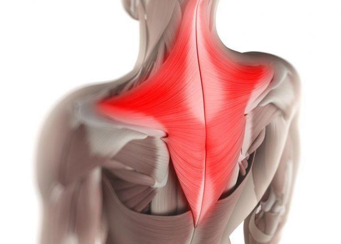 «Окаменелость» мышц