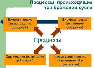 Процессы, происходящие при брожении сусла