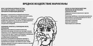 Психологические воздействия марихуаны на организм