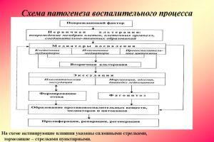 Схема патогенеза воспалительного процесса