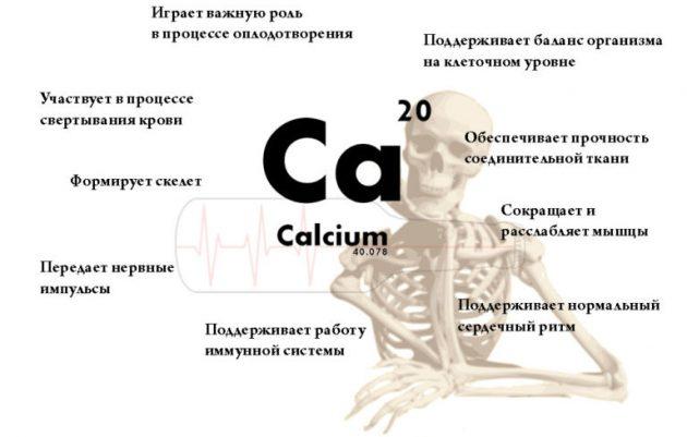 Что делает кальций