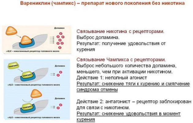 Фармакологическое действие Варениклина