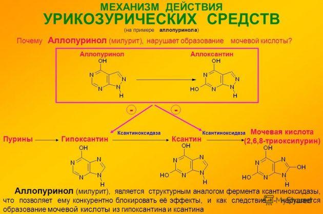 Фармакология Аллопуринола