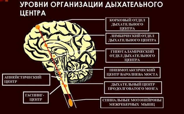 Нарушение работы дыхательного центра головного мозга