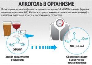 Воздействие водки на набор веса
