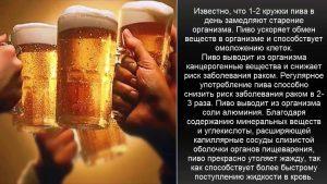 Полезные и целебные (лечебные) свойства пива
