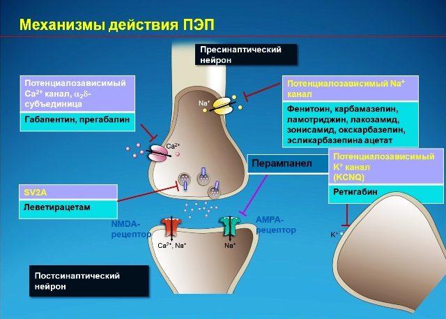 Противоэпилептическое действие