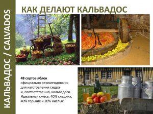 48 сортов яблок официально рекомендованы для изготовления сидр