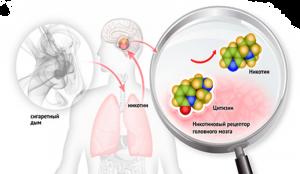 Как воздействует на организм препарат Чампикс