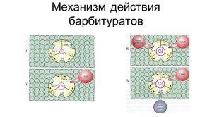 Механизм действия барбитуратов