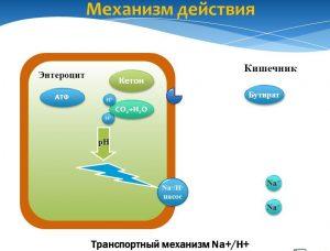 Механизм действия бутирата